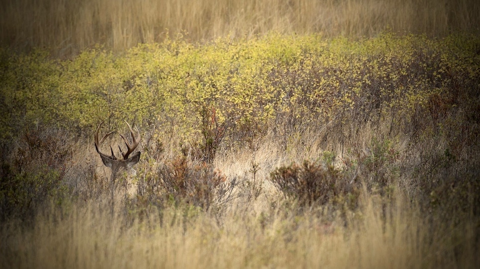 Basic Guide to Weather Patterns and Deer Behavior