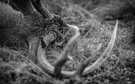 Kill Big Bucks on Public Land