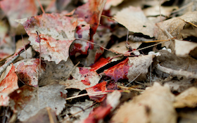 Learn How Blood Color Helps Hunters Track Animals