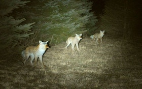 Judging Distance At Night, A Good Skill For Hunters