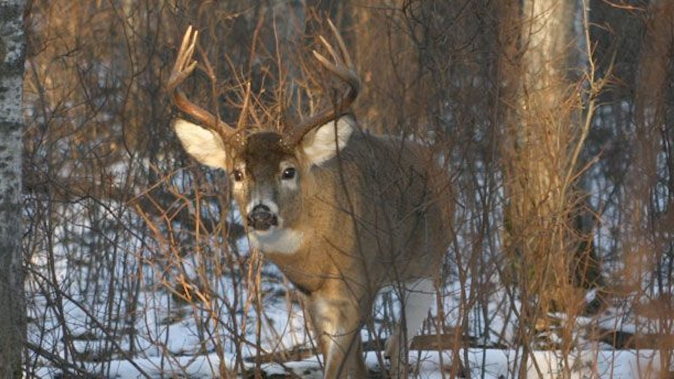 Keep pressure on coyotes and help deer hunting success