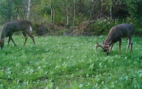 Planning Your Food Plot for Killer Results