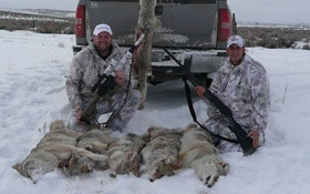 Hunt Harder for Late Season Coyotes