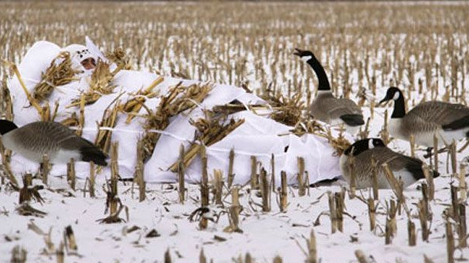 Prepping your layout blind for duck season