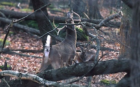 Mythbusting: What's true and what's not about deer hunting