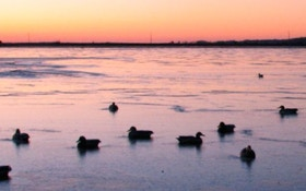 How Will The Flooding Of The Mississippi Affect Waterfowl?