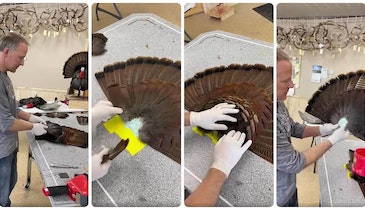 DIY Video: Expert Tips for Mounting a Turkey Tail