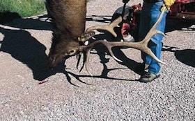 The proper gear for Western elk—part II