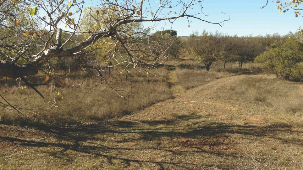 Overlooked Oklahoma Whitetails