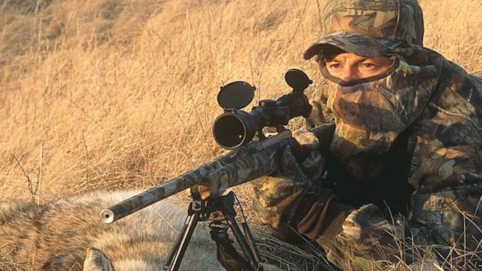 Coyote Hunting Tactics for Open Country