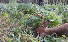 How to plant food plots in a drought-part II