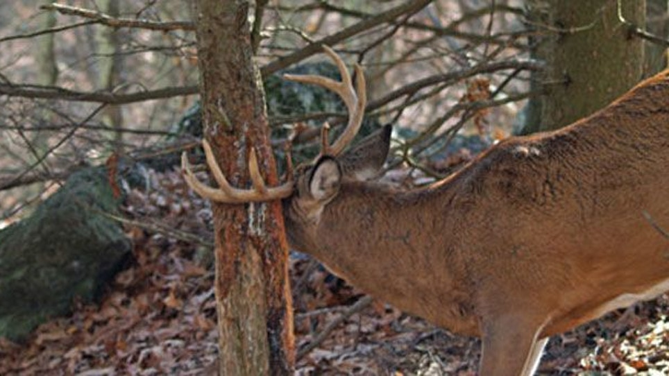 What's your whitetail IQ?