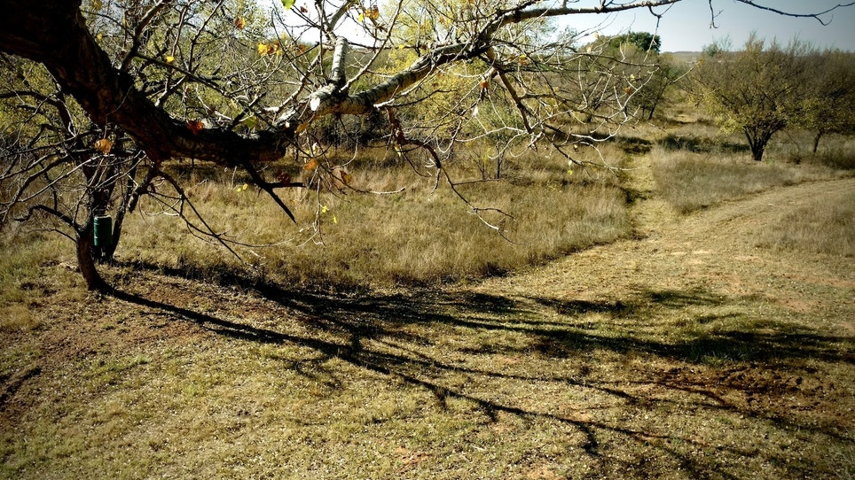 Here's How to Know If You're Overhunting Your Treestand