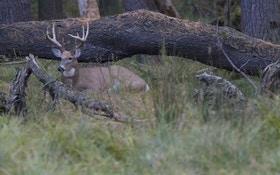 Overlooked Whitetail Bedding Areas