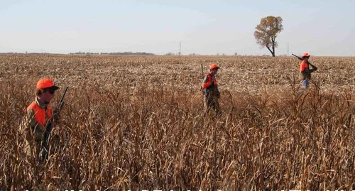 In farm country, a great time to be in a deer stand is pheasant opener, when shotgunners push thick cover suitable for both birds and bucks.