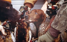 Training Techniques that Make Your Pheasant Dog Better