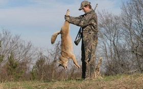 Does Predator Control Help Your Deer Population?