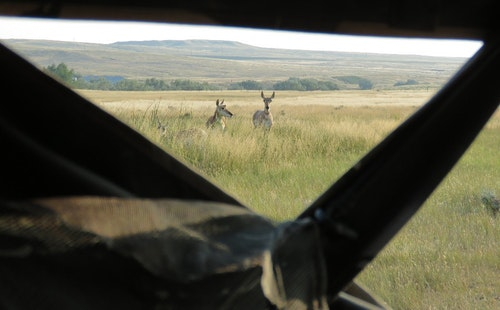 Bowhunters should always pack a pop-up blind when heading West. A blind set up near a waterhole is especially effective on pronghorns.