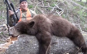 A Montana Chocolate Bear Hunt