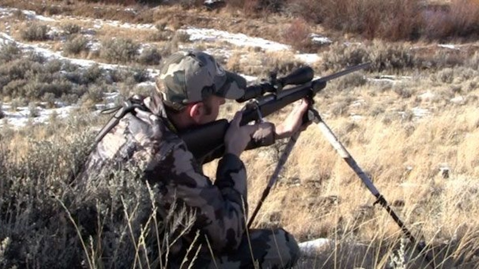 Shooting Coyotes At Long Range