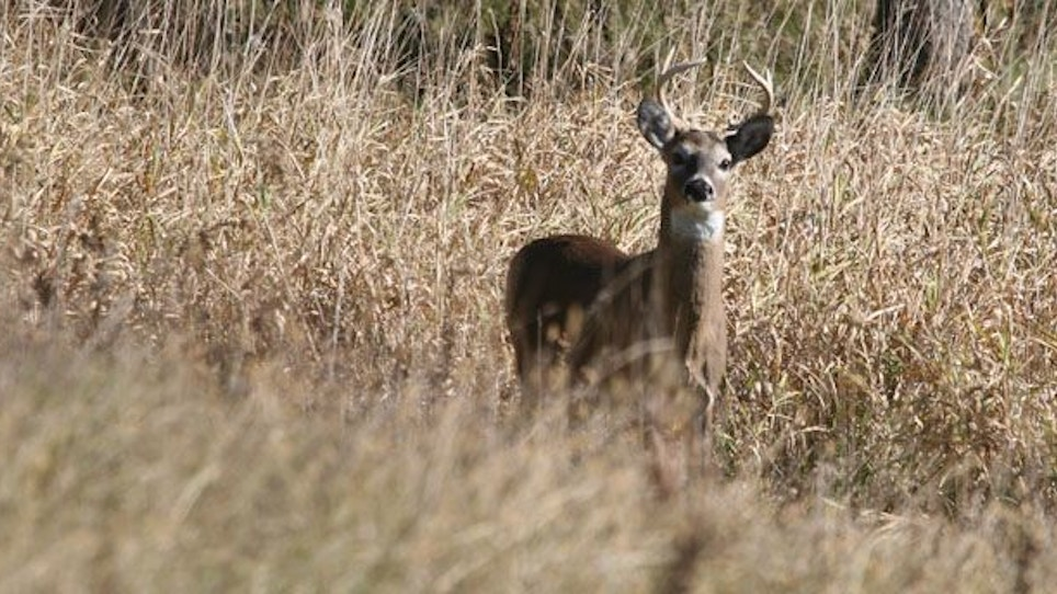 Will Quality Deer Management Work For You?
