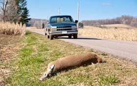 How Do You Know Roadkill Is OK to Eat?