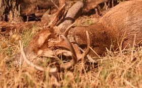 The Science Of The Rut — Part 2