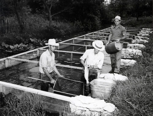 Readers will learn about fish and fisheries conservation from across the United States. Show above are channel catfish brood pens, Tishomingo, Oklahoma, 1955.