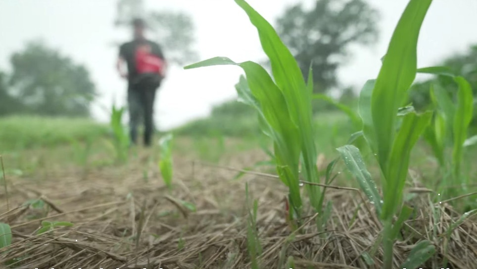 Video: Save Your Failing Food Plot — Now!