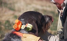 Your hunting dog may have trouble hearing commands