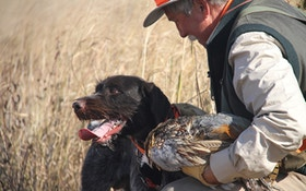 Honorable Bird Hunters Dispatch With Grace