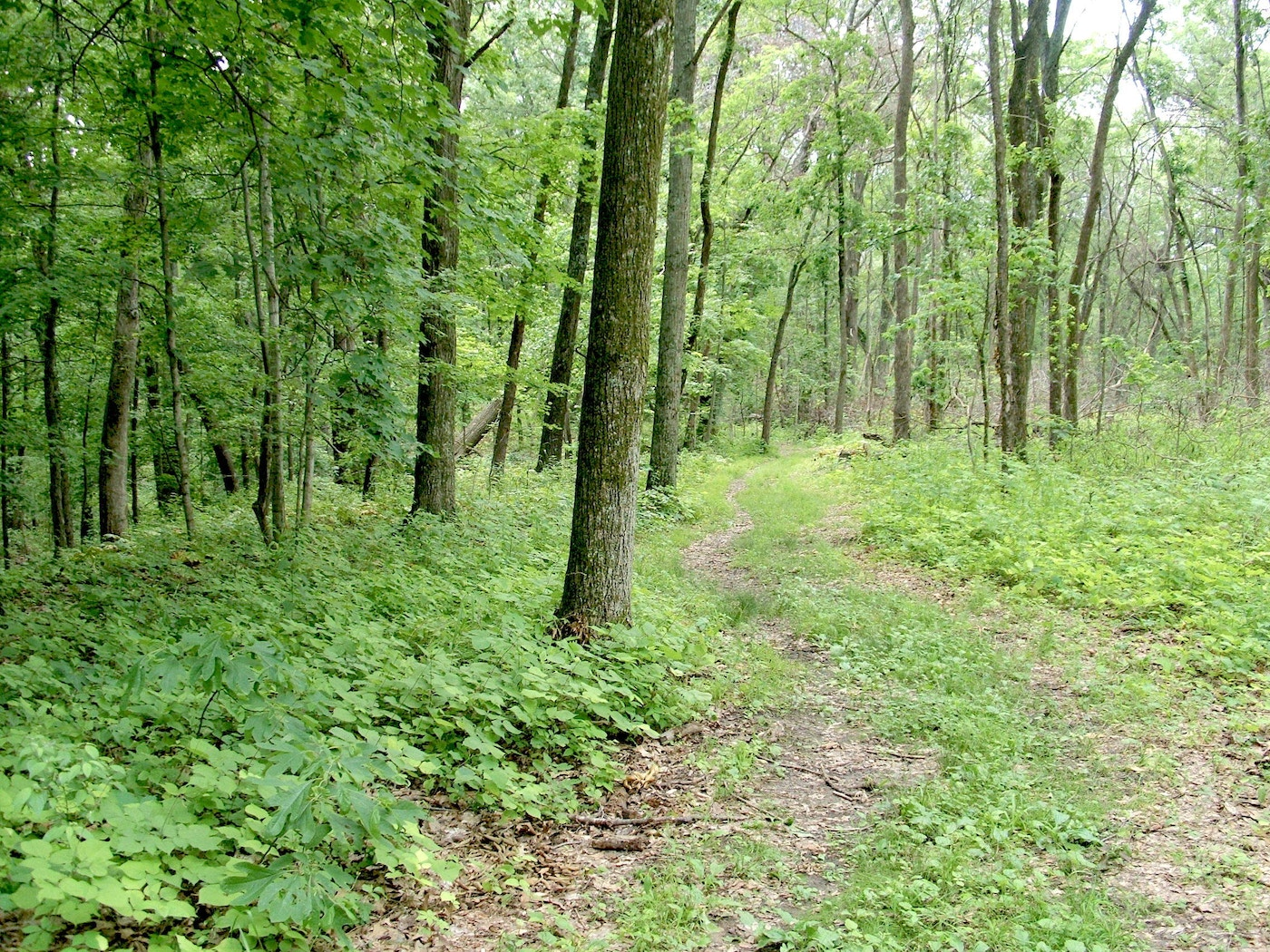 How To Draw In Deer If You Don T Have Food Plots Grand View Outdoors