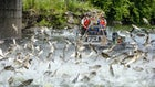 Officials Cautiously Optimstic About Spread of Silver Carp