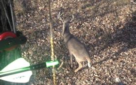Snort/Wheeze: A Whitetail Hunter's No. 1 Long-Range Vocalization
