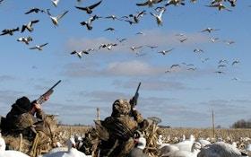 Spring Snow Goose Hunting!