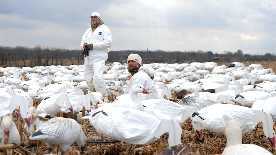 Snow goose hunting: Tips for staying hidden