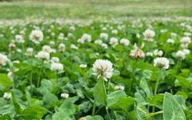 Video: Stop Mowing Perennial Food Plots