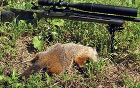 Summertime Fun—Woodchucks!