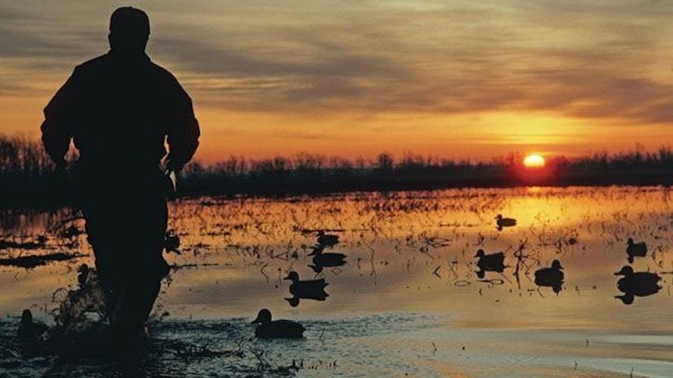 Early Season Teal Hunting