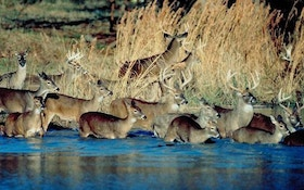 Can You Have Too Many Deer?