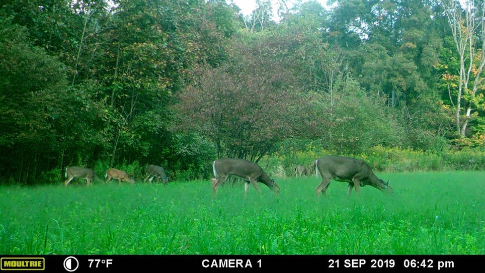 When to Fill Antlerless Deer Tags: Early vs. Late Season