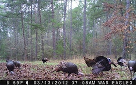 Keep using your trail cameras during the off season