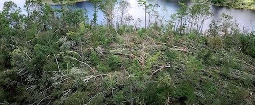 In the author's hunting area in Wisconsin, straight-line winds up to 85 mph that lasted nearly 20 minutes combined with a couple tornadoes and torrential rains uprooted or snapped many large trees. The storm, which hit in July 2019, has provided whitetails with limitless security cover.