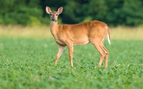 8 steps to build a backyard food plot