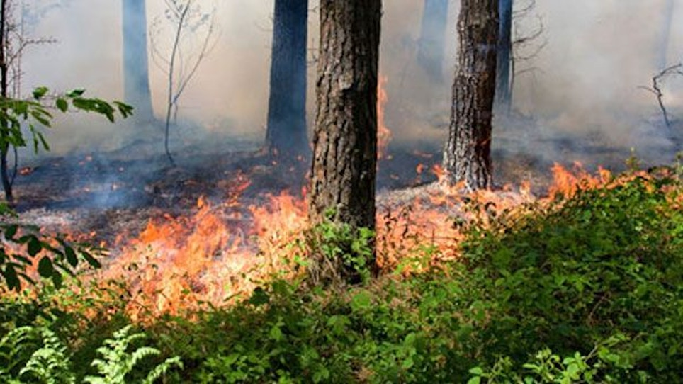 Things to Consider Before a Controlled Burn