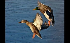 Duck Numbers: The good and the bad