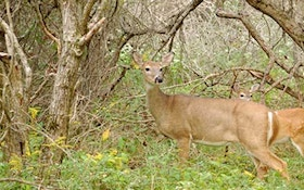 Spring and summer weather can ruin a fall hunt
