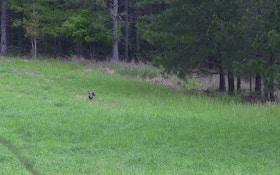 Tracy Groves on hunting turkeys on public land
