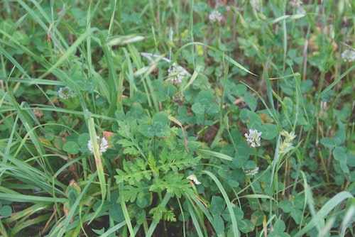 Weeds are tough to beat, but using the right herbicides can help reduce weed competition in any food plot.