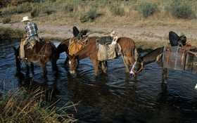 Plan Your Western Elk Hunt